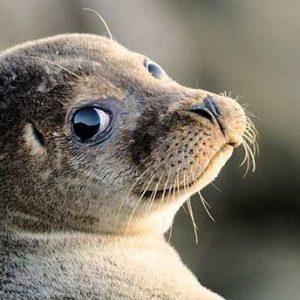 Isole egadi foca monaca