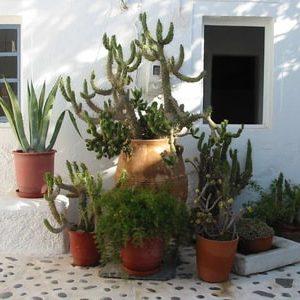 piante grasse-min